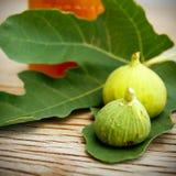 Lona e cartaz do fruto do figo do vintage Imagem de Stock