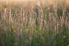 Lond grass Stock Photography