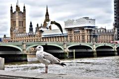 Londen! royalty-vrije stock afbeeldingen