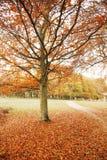 Londen Autum, het Park van Richmond Stock Fotografie