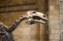 Londen De dinosaurussen tonen in Nationale geschiedenismuseum en partijen van mensen rond het artefact royalty-vrije stock afbeelding