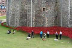 LONDEN, HET UK - 22 AUGUSTUS: Papavers bij de Toren in Londen op Augus Stock Afbeeldingen