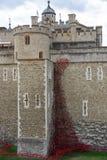 LONDEN, HET UK - 22 AUGUSTUS: Papavers bij de Toren in Londen op Augus Stock Foto's