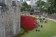LONDEN, HET UK - 22 AUGUSTUS: Papavers bij de Toren in Londen op Augus Stock Foto