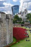 LONDEN, HET UK - 22 AUGUSTUS: Papavers bij de Toren in Londen op Augus Stock Afbeelding