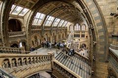 Londen, het UK - 25 Juli, 2017: Mensen die de nieuwe Hintze-zaal in het Biologiemuseum bezoeken Stock Foto