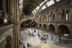 Londen, het UK - 25 Juli, 2017: Mensen die de nieuwe Hintze-zaal in het Biologiemuseum bezoeken Royalty-vrije Stock Foto