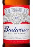 LONDEN, HET UK - 21 MAART, 2017: Flessenetiket van Budweiser-Bier op witte achtergrond, een Amerikaans die lagerbier eerst in 187 Stock Afbeeldingen