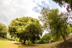 28 07 2015, LONDEN, het UK, Mening van Kew-Tuinen Royalty-vrije Stock Foto