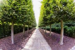 28 07 2015, LONDEN, het UK, Mening van Kew-Tuinen, Koninklijke Botanische Tuinen Royalty-vrije Stock Foto
