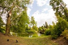 28 07 2015, LONDEN, het UK, Mening van Kew-Tuinen, Koninklijke Botanische Tuinen Stock Afbeeldingen