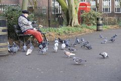 Londen, het Verenigd Koninkrijk: 7 maart 2018: Een oude mensen voedende duiven dichtbij Russell Square stock afbeelding
