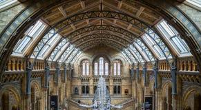 Londen Nationaal geschiedenismuseum stock foto's