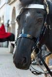 LONDEN - NOVEMBER 3: Paard van de Cavalerie van het Queenshuishouden in L Stock Afbeelding