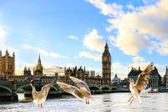 London Royaltyfri Foto