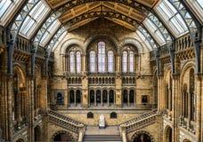 музей london истории Англии естественный Стоковые Изображения