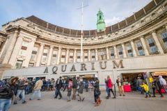 London akvarium Fotografering för Bildbyråer