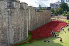 LONDON - AUGUST 22 : Poppies at the Tower in London on August 22. 2014. Unidentified people Royalty Free Stock Photo