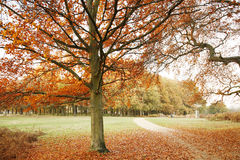London Autum, Richmond Park Stock Image