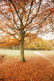 London Autum, Richmond Park Stock Photography