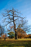 London Autum, Richmond Park Royalty Free Stock Photography