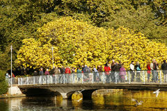 London Autum, St James's Park Royalty Free Stock Photography