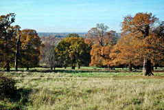 London Autumn, Richmond Park Stock Photos