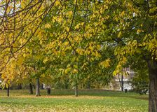 London - an autumnal park. This image shows a view of a park in London with some yellow trees Royalty Free Stock Images