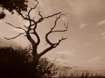 London-Baumnatur Sepiageheimnis-Himmelniederlassungen verzweigt sich furchtsam Stockbilder