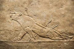 London. British museum. Hunting relief from Palace of Assurbanipal in Nineveh, Assyria Royalty Free Stock Photos