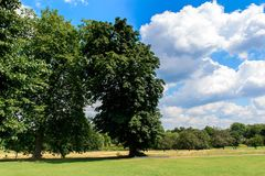 Hyde Park, one of the Royal Parks of London. LONDON, ENGLAND - JULY 23, 2016: Nature of the Hyde Park, one of the largest parks in London, and one of the Royal Stock Photos
