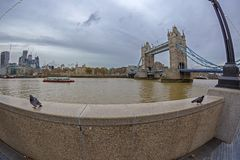 Tower Bridge, Thames River, pigeons in front, boats and building Stock Photography