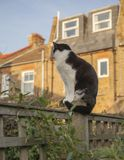 London England, UK - en vit och svart katt i trädgården arkivfoto