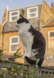 London England, UK - en vit och svart katt i trädgården på en solig dag royaltyfria foton