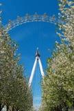 London Eye behind blooming Royalty Free Stock Photos
