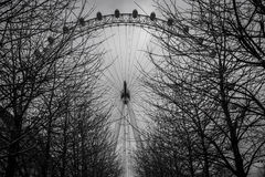 London Eye behind the branches Royalty Free Stock Photos