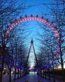 London Eye. The London Eye in the evening Stock Images