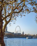London eye from the other side of the thames river. And tree leaves stock photos