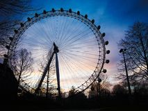 London eye. Sunset london eye Stock Photography