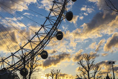 London Eye with a Tree with yellow sunset and blue sky Royalty Free Stock Image