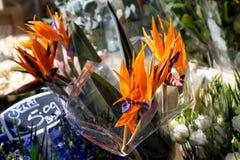 London Förenade kungariket - April 17, 2015: söndag för Columbia vägblomma marknad Gataaffärsmän säljer deras materiel Royaltyfri Foto