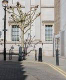 London gata med cykeln och trädet arkivfoto
