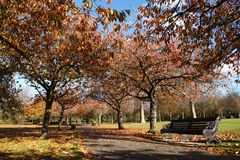 Greenwich Park in autumn colors. London Greenwich Park in beautiful autumn colors stock images