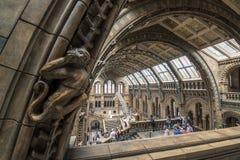 London, Großbritannien - 25. Juli 2017: Leute, welche die neue Hintze-Halle im Naturgeschichtliches Museum besichtigen Lizenzfreie Stockfotos