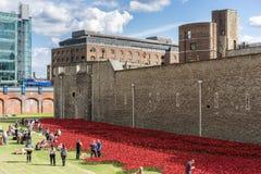 LONDON, GROSSBRITANNIEN - 22. AUGUST: Mohnblumen am Turm in London auf Augus Lizenzfreies Stockbild