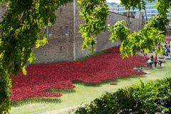 LONDON, GROSSBRITANNIEN - 22. AUGUST: Mohnblumen am Turm in London auf Augus Lizenzfreie Stockbilder
