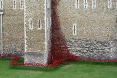 LONDON, GROSSBRITANNIEN - 22. AUGUST: Mohnblumen am Turm in London auf Augus Stockfotos