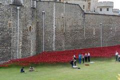 LONDON, GROSSBRITANNIEN - 22. AUGUST: Mohnblumen am Turm in London auf Augus Lizenzfreie Stockfotos