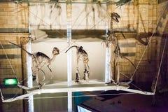 LONDON, GROSSBRITANNIEN - 27. JULI 2015: Naturgeschichtemuseum - Details vom Dinosaurus Lizenzfreie Stockfotografie