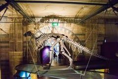 LONDON, GROSSBRITANNIEN - 27. JULI 2015: Naturgeschichtemuseum - Details vom Dinosaurus Lizenzfreies Stockbild